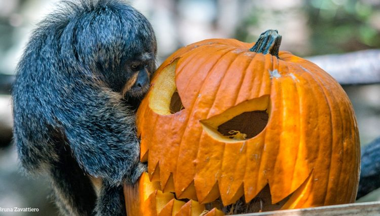 Halloween im Parco Natura Viva