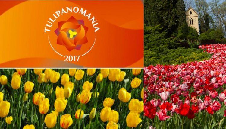 Tulpenmanie im Giardino Sigurtà und in Bardolino