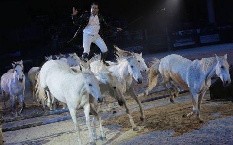 Verona lädt zur 116. Pferdemesse
