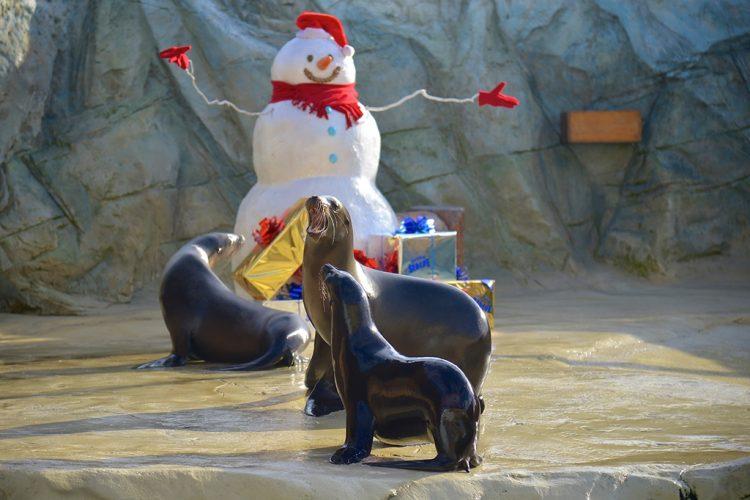 Erstes Weihnachtsfest für Davy Jones im Gardaland Sea Life