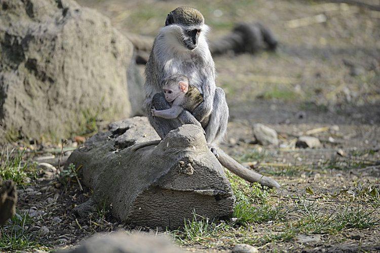 Parco Natura Viva: eine Weltreise mit 250 Tierarten