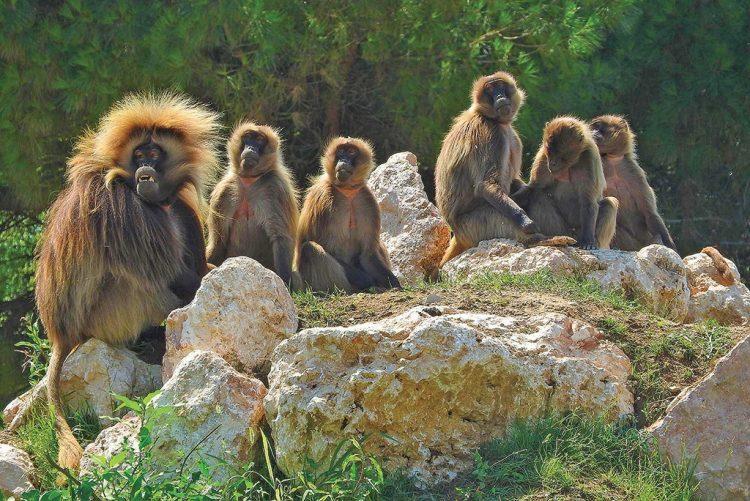 """März: Im Parco Natura Viva wird """"das Wiedererwachen der Natur"""" gefeiert"""