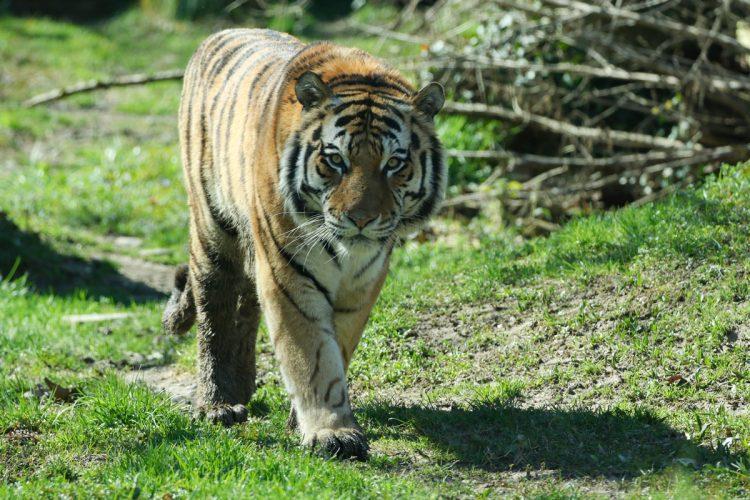 Der Parco Natura Viva von Bussolengo wurde am 21. Mai wiedereröffnet