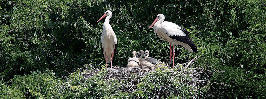 Parco del Mincio: außergewöhnliche Eingriffe für die Biodiversität
