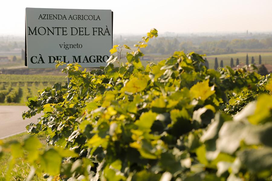Wine Spectator und Forbes krönen Custoza-Wein Cà del Magro