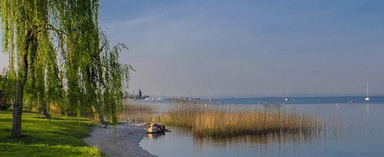 Bardolino: ein zweijähriges Projekt zum Schutz der Schilfgürtel des Sees